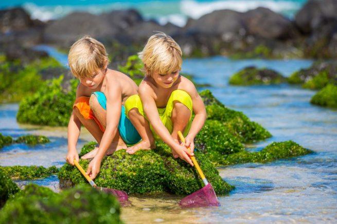 Kids-Rockpooling-Beach